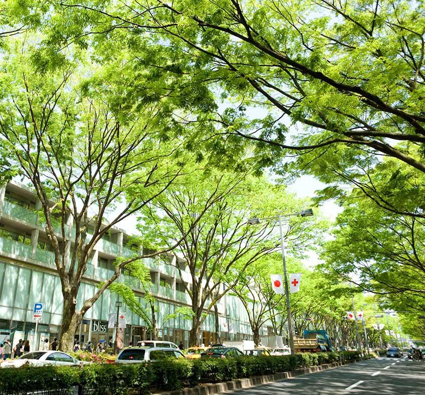 aoyama street 3